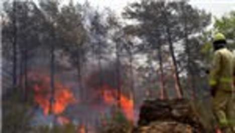 Köyceğiz'de 50 hektar çam ormanı yok oldu