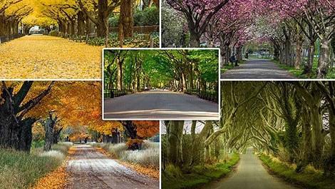 dünyanın en güzel ağaç tünelleri