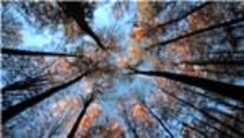 2016'da 40 bin 650 hektar alan ağaçlandırılacak