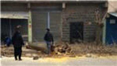 Evinin önündeki ağacı kesti, 30 fidan dikme cezası aldı