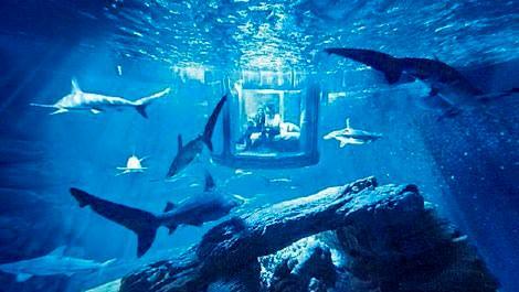 Köpekbalığı manzaralı oda