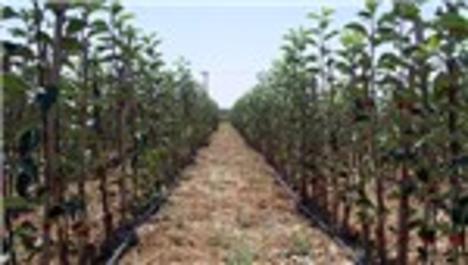 Boş arazilere meyve fidanları dikilecek