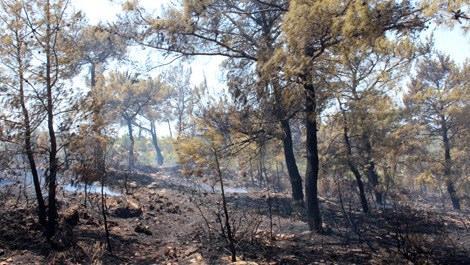 Bodrum'da 5 hektarlık ormanlık alan yandı