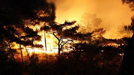 Kazdağları'nda 40 hektar ormanlık alan zarar gördü
