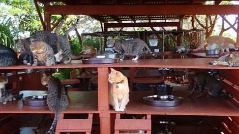 Hawaii kedi barınağı