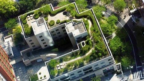 Yeşil çatılar dünyada hızla yayılıyor
