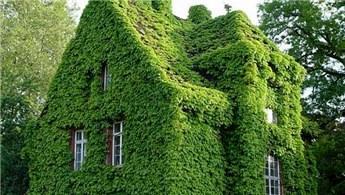 Bahçem yok diye üzülmeyin!