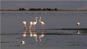 Yalova'daki 'Kuş Oteli' flamingo konuklarını ağırlıyor