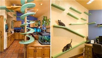 Kediniz için evde yaşam alanı açan dekorasyon modelleri