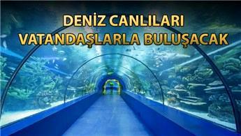 Trabzon'da iki  vadi arasına 'Tünel Akvaryum' yapılacak
