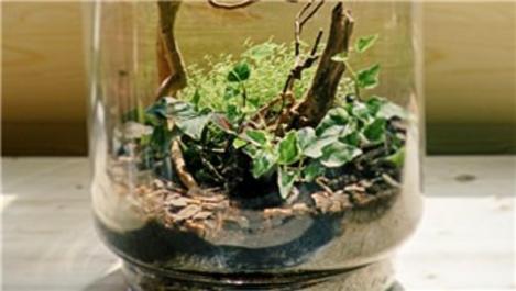 Bakımı kolay ev bitkileri