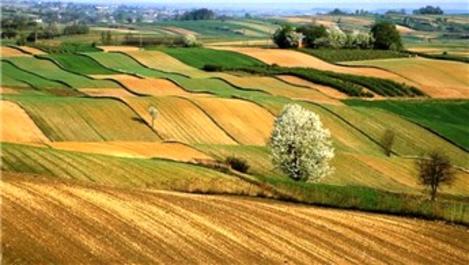 Türkiye, tarım arazilerinin yüzde 8,2'sini 10 yılda kaybetti!