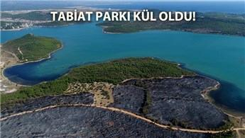 Ayvalık'ta yangın sonrası üzüntü verici manzara!