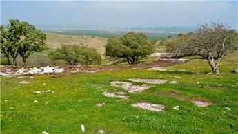 Darıca Belediyesi'nden mesire alanında inşaat ihalesi!