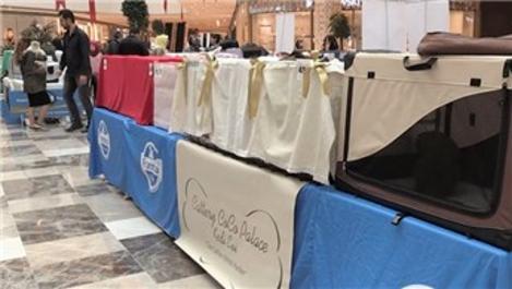 Vadi İstanbul AVM'de kedi yarışması başladı
