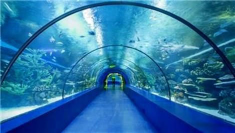 Trabzon'daki tünel akvaryum projesi için ihale yapılacak