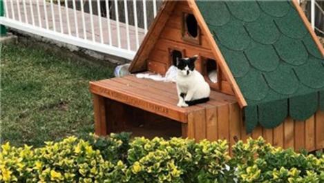 DKMP, halka bin adet kedi-köpek evi dağıttı