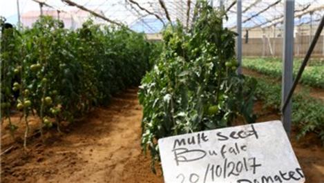 TİKA ve İHH'dan Somali'ye Uygulamalı Tarım Okulu