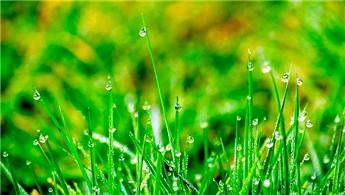 Kamu kurumlarına 'yağmur bahçeleri' kurulacak