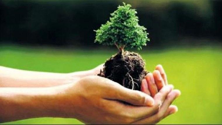 Türkiye'nin yüzde 29'u orman olacak