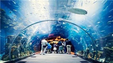 Trabzon'da Tünel Akvaryum projesi başlıyor