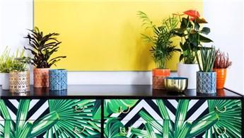 İşte ev dekorasyonu için ideal bitkiler!