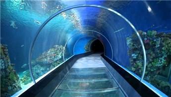 Tünel Akvaryum projesi şekilleniyor