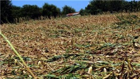 Osmaniye'deki tarım arazilerinde hasar tespit çalışmaları bitti