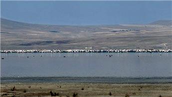 Akşehir Gölü hakkında kesin korunacak hassas alan kararı!