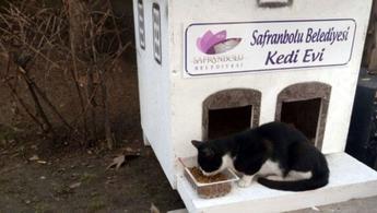 Safranbolu'ya yakışır kedi evleri