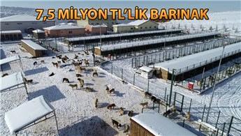 Sivas'ta sokak hayvanlarına özel kaloriferli odalar!
