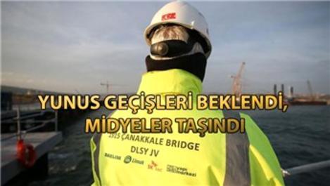 Çanakkale Köprüsü inşaatında biyoçeşitlilik hassasiyeti