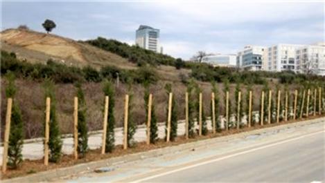 Bilişim Vadisi'ne yaklaşık 2 bin adet ağaç dikildi