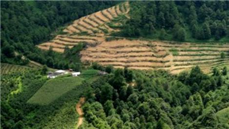 Doğu Karadeniz'de orman alanları arttı