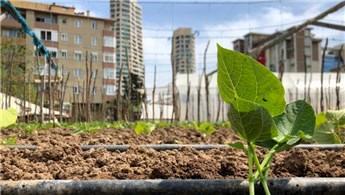 İstanbul'un göbeğinde sera bahçesi!