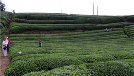 Rize'deki çay bahçesi turistlerin uğrak mekanı haline geldi