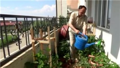 Apartman dairesinde organik sebze yetiştiriciliği!