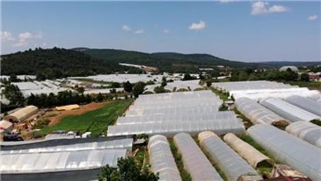İstanbul'un en büyük sera üretimi Göçbeyli köyünde yapılıyor