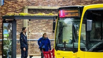 Hollanda'da otobüs duraklarının üzeri yeşillendi
