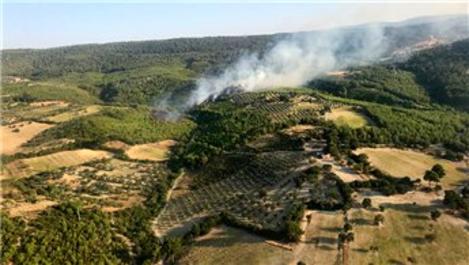 İzmir'in Bergama ilçesinde orman yangını çıktı