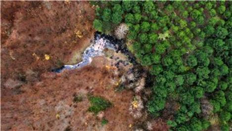Ormanı katleden yüzlerce lastik görenleri şoke etti
