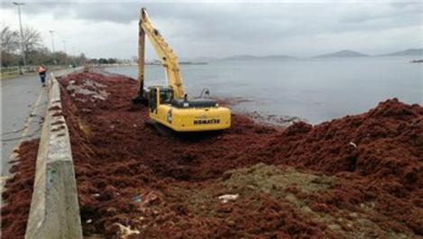 Kızıla bürünen Caddebostan Sahili'nde temizlik yapılıyor