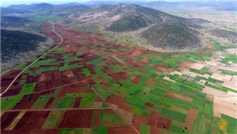 Aydın, Denizli ve Muğla'da 269 bin dekar arazi toplulaştırıldı