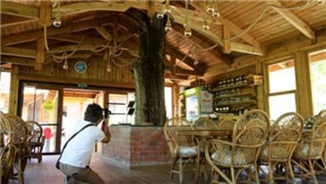 Artvinli işletmecinin ağaç sevgisi görenleri şaşkına çeviriyor