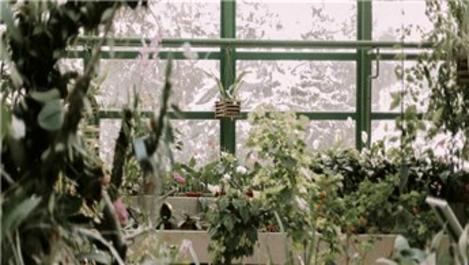 İç ve dış mekanda bitkiler kışa nasıl hazırlanmalı?
