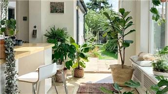 Ev dekorasyonunda yeni trend biyofilik tasarımlar!