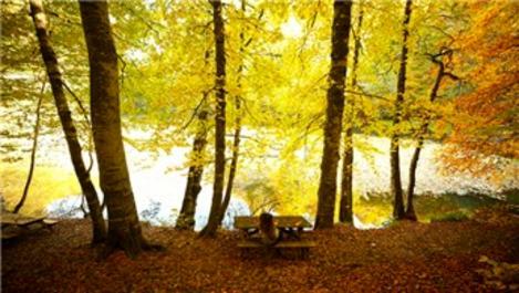 Orman denizi Yedigöller hayranlık uyandırıyor!