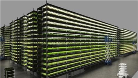 14 katlı dikey tarla ile yılda 15 defa hasat yapılacak