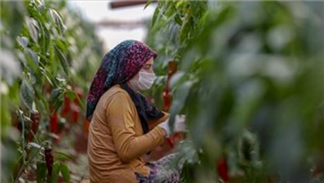 Antalya'da sera üretimi pandemide de hız kesmedi!