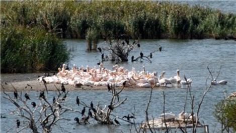 Balıkesir Kuş Cenneti Milli Parkı'nda çalışmalar sürüyor!